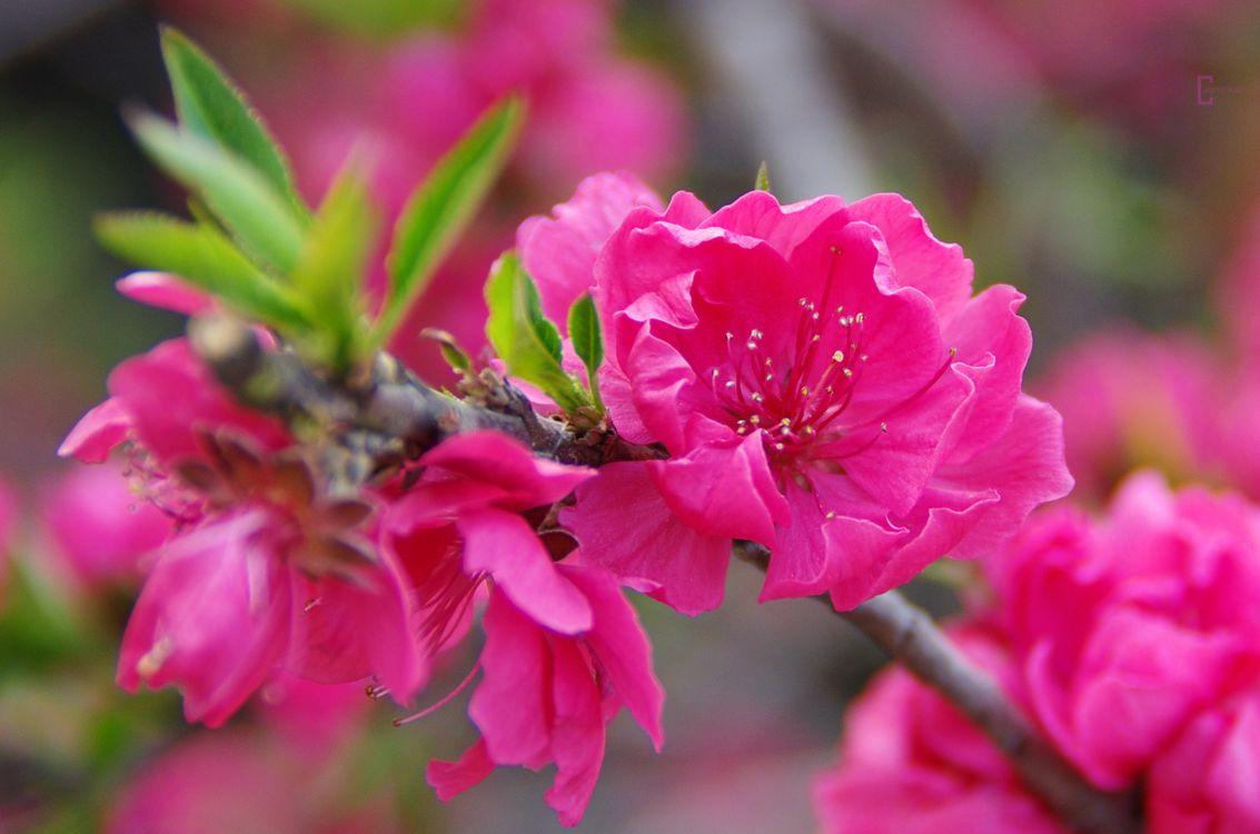 Фото бесплатно цветение, цветы, весна - на рабочий стол