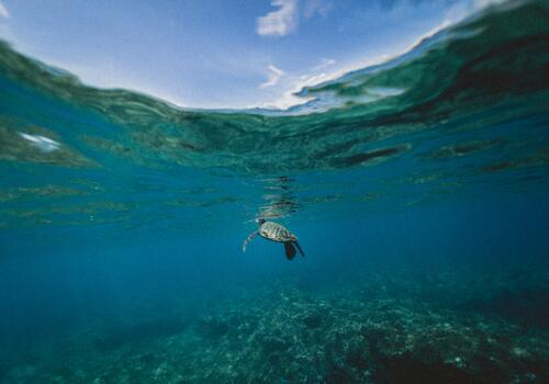Фото бесплатно подводный мир, подводный, логгерхед