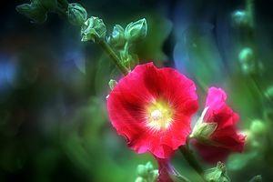 Photo free macro, color, flower arrangement