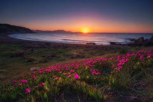 Бесплатные фото Провинция Бискайя,Испания,Страна Басков,закат,море,берег,цветы