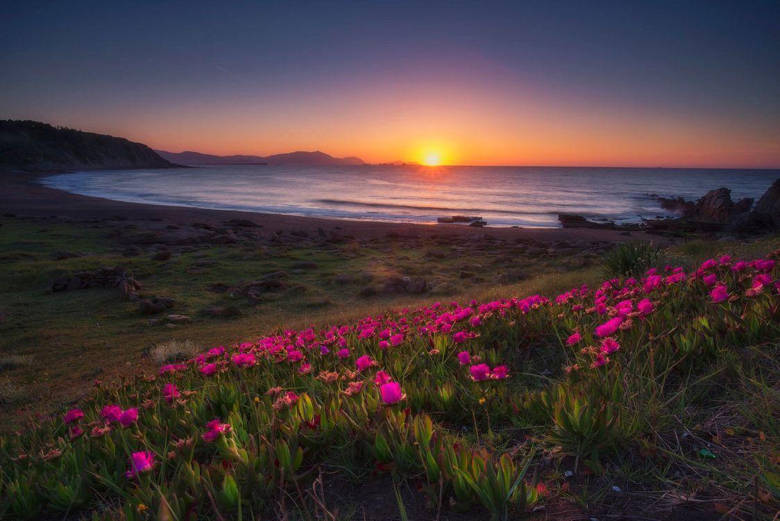 Фото бесплатно Провинция Бискайя, Испания, Страна Басков, закат, море, берег, цветы, пейзаж, пейзажи