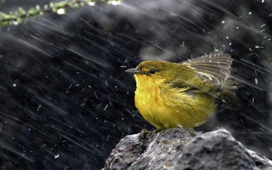 Фото бесплатно дождь, птенец, птица