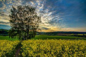 Бесплатные фото закат,холмы,поле,дерево,цветы,пейзаж