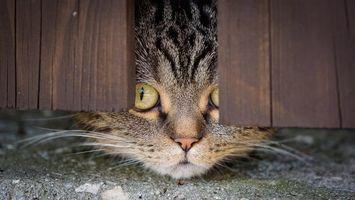 Кот подсматривает