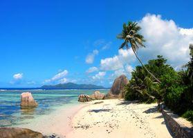 Бесплатные фото море,пляж,пальмы,отдых,остров,тропики,Сейшелы