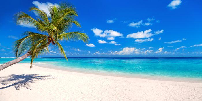 Скачать пляж, тропики картинку
