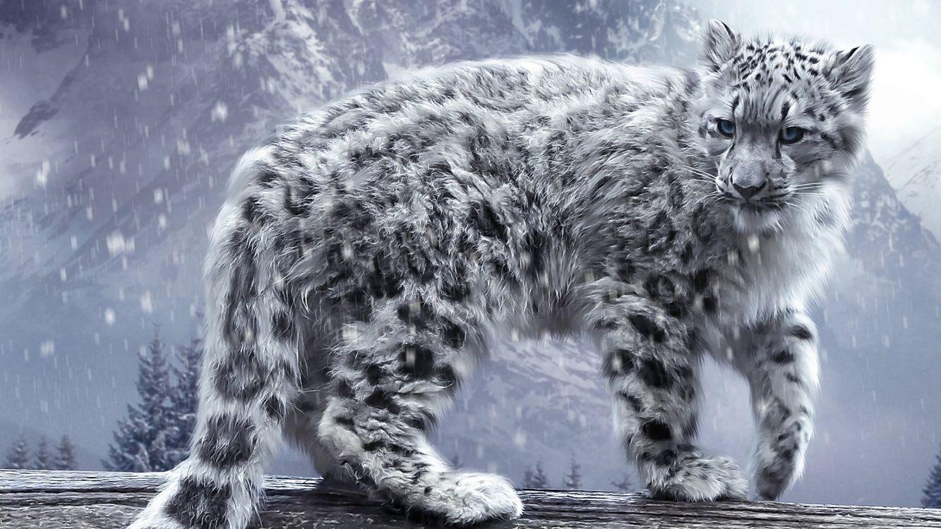 Фото бесплатно леопард снег зима - на рабочий стол