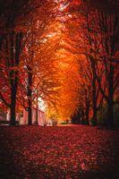 Бесплатные фото осень,парк,деревья,листва,autumn,park,trees