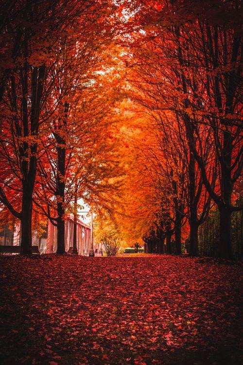 Фото бесплатно осень, парк, листва - на рабочий стол