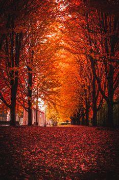 Заставки осень, парк, деревья