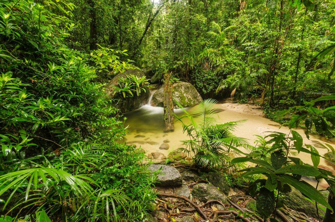 Фото бесплатно Моссман-Ущелье, Австралия, Тропический лес, природа