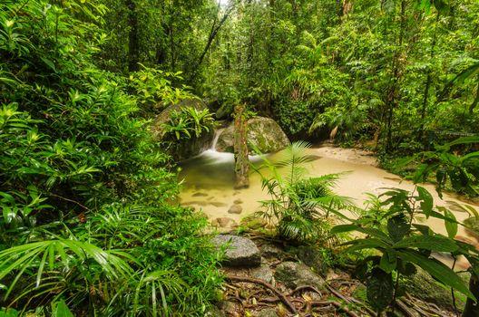 Фото бесплатно Моссман-Ущелье, Австралия, Тропический лес