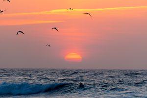 Бесплатные фото облака,скала,закат,цветок,зеленый,восход солнца,птицы
