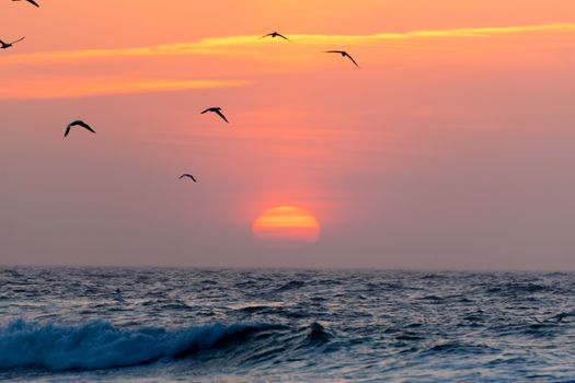 Фото бесплатно облака, скала, закат, цветок, зеленый, восход солнца, птицы, силуэт птицы, силуэт, летающие птицы