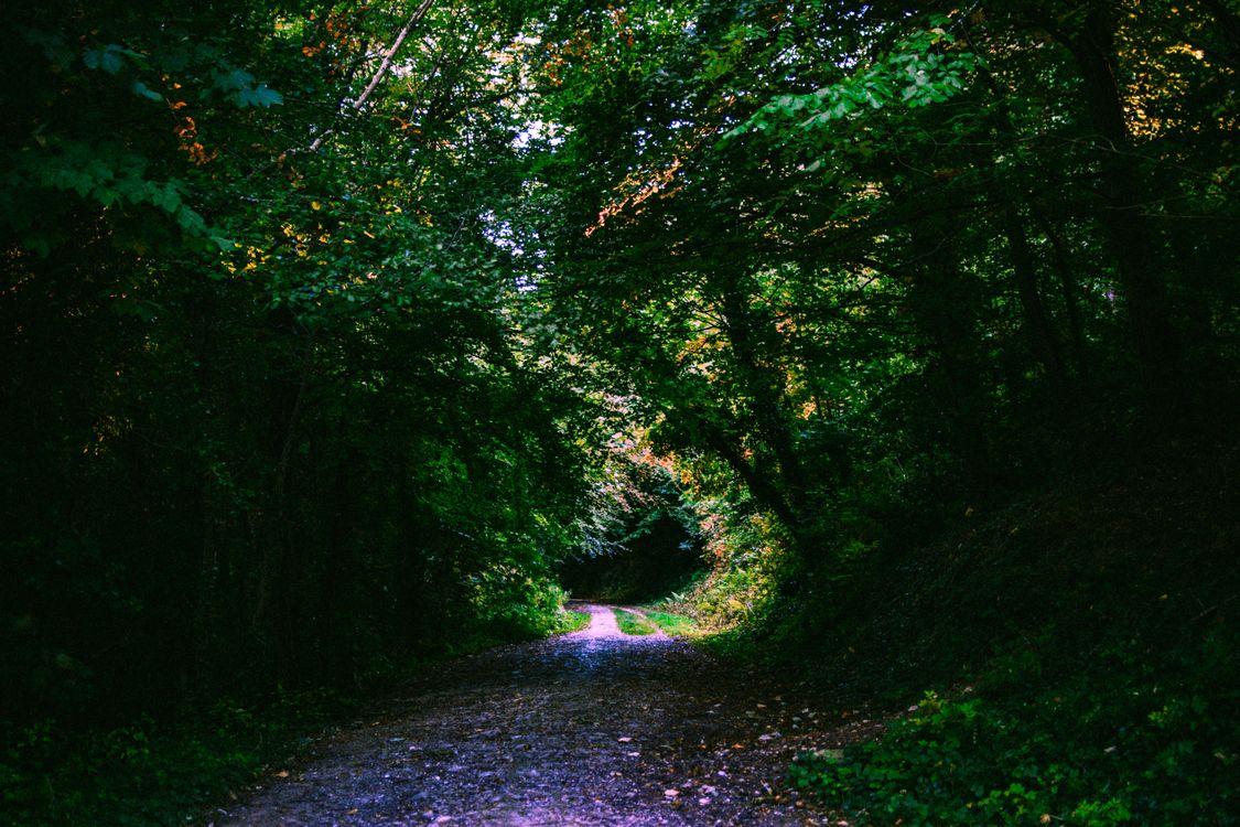Фото бесплатно лес, тропинка, листва - на рабочий стол