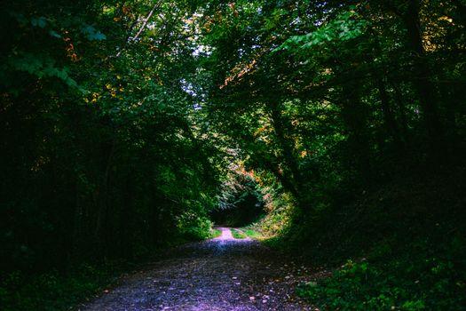 Фото бесплатно лес, тропинка, листва