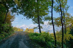 Заставки Австрия, природа, деревья