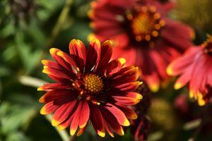 Заставки цветы, красный, макросъемка