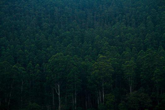 Photo free nature, panoramic, tree