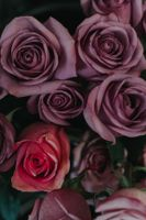 Photo free roses, bouquet, buds