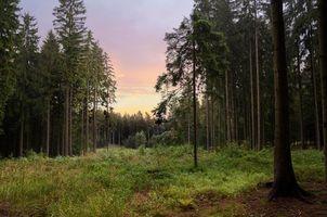 Бесплатные фото закат,лес,деревья,природа