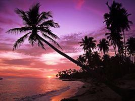 Фото бесплатно пляж, пальмы, силуэты