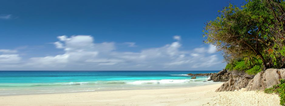 Photo free palm trees, paradise, coast