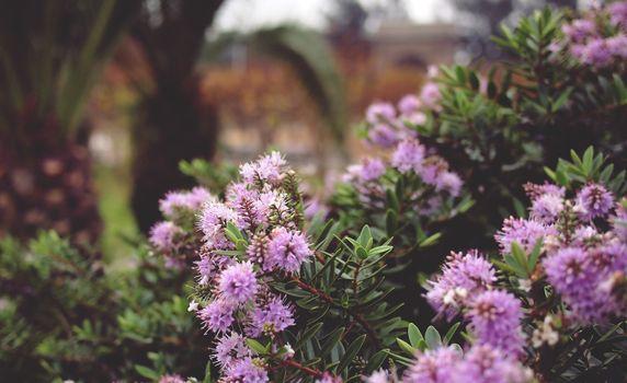 Фото бесплатно пурпурные цветы, размыты, листья