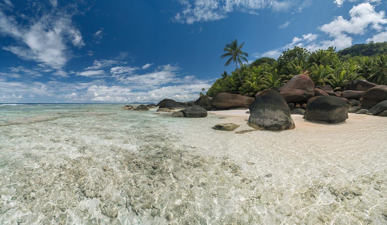 Обои море, сейшельские острова, пальмы картинки на телефон