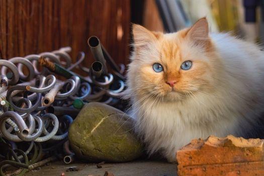 Заставки животные, кошка, взгляд