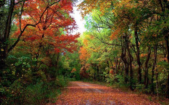 Лесная дорога усеянная листьями