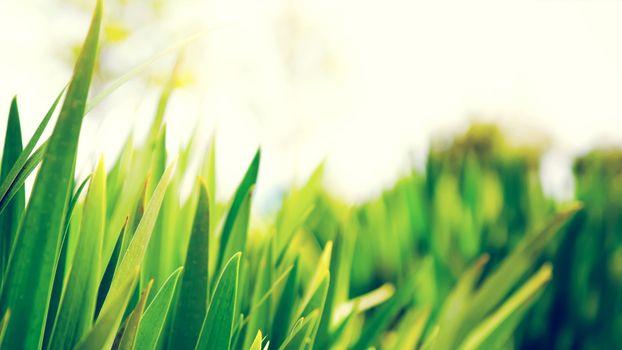 Photo free plants, big leaves, light burst