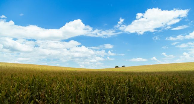 Фото бесплатно сельское хозяйство, поле, облака