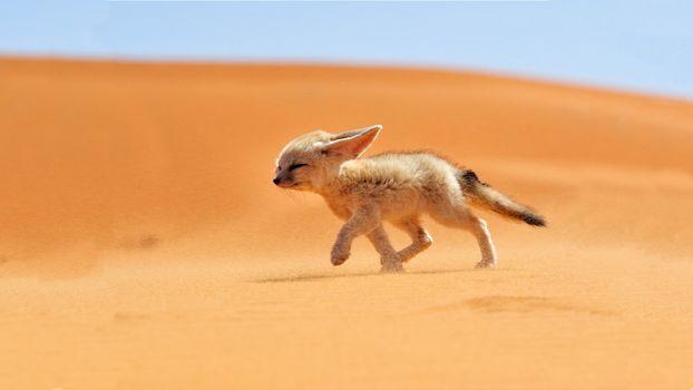 Фото бесплатно животные, песок, дикая природа