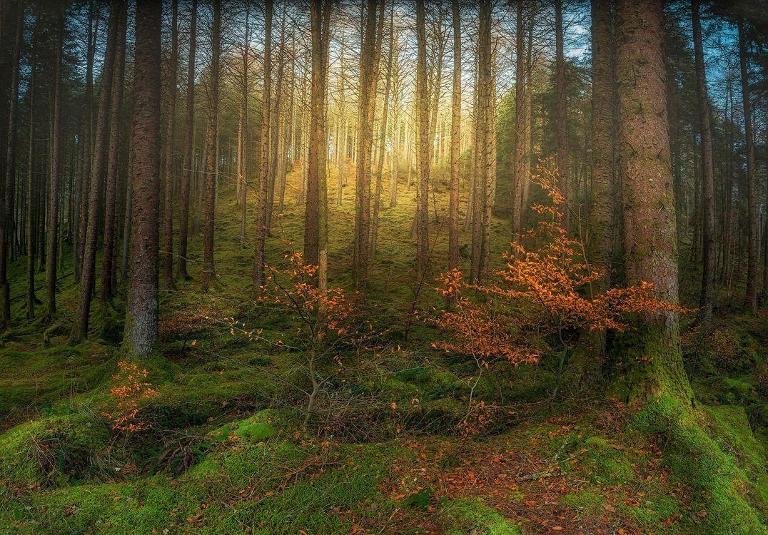 Фото бесплатно лес, деревья, природа - на рабочий стол