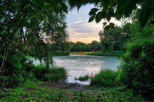 Бесплатные фото заводь, Днепр, Киев, Украина, закат, река, деревья