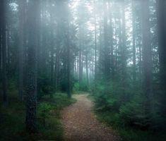 Бесплатные фото лес,деревья,туман,тропинка,природа