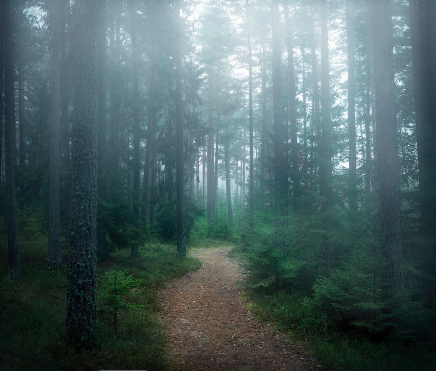 Фото бесплатно лес, деревья, туман - на рабочий стол