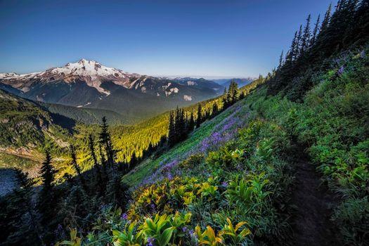 Бесплатные фото Дикая природа ледника Пик,горы,лес,цветы,деревья,пейзаж