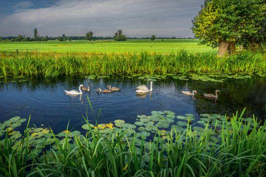 Фото бесплатно Голландия, река, лебеди