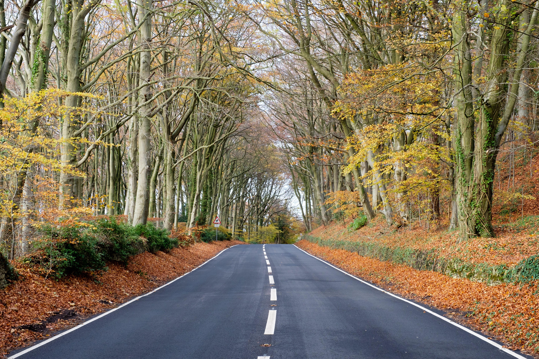 Обои осень, дорога, деревья, пейзаж
