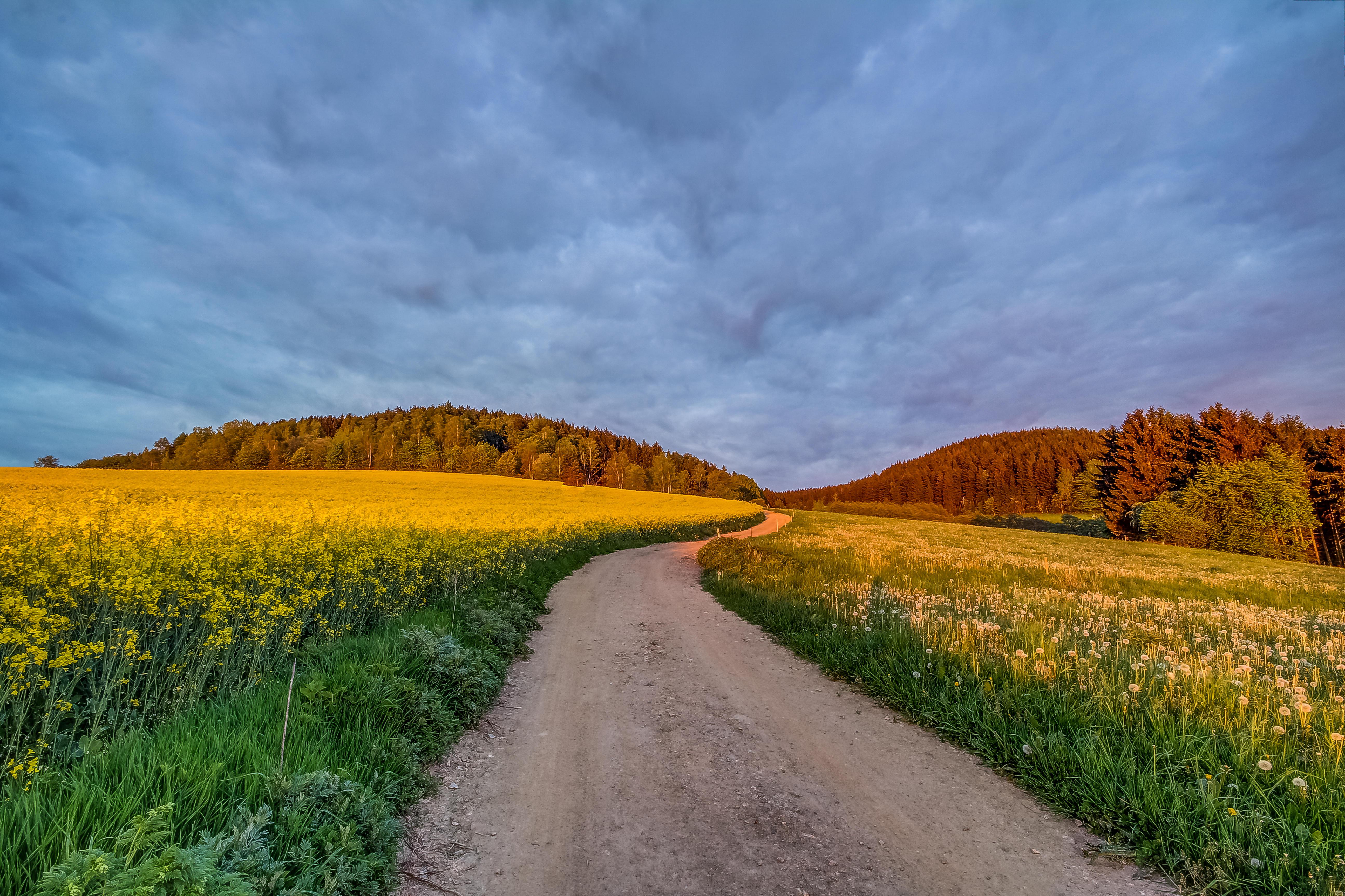 Обои поле, дорога, деревья, пейзаж