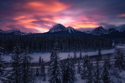 Photo free trees, winter, Banff National Park