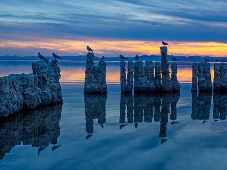 Фото бесплатно Отражение птиц, Бомбей-Бич, Море