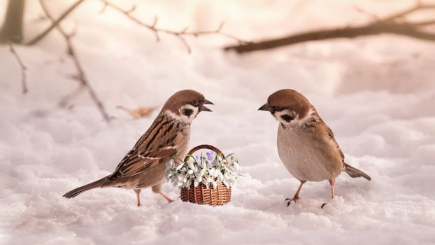 Фото бесплатно цветочная корзина, снег, птицы