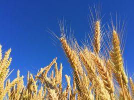 Фото бесплатно трава, роста, растение