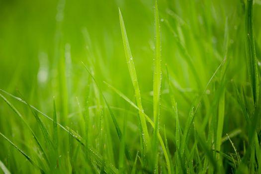 Молодая трава
