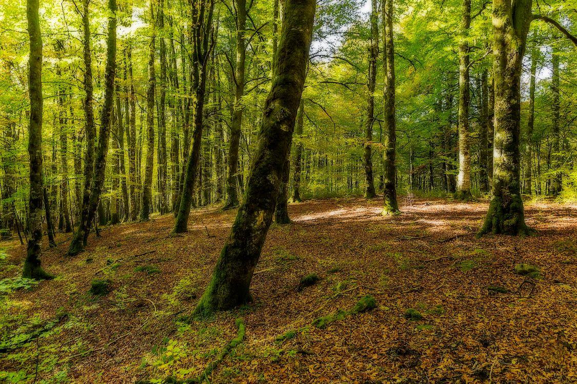 Фото бесплатно лес, деревья, природа, пейзаж, природа