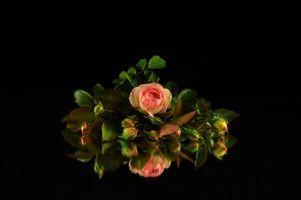 Photo free rose, flower, flowers