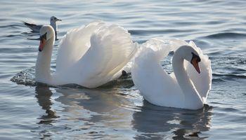Фото бесплатно птицы, белый, цвета
